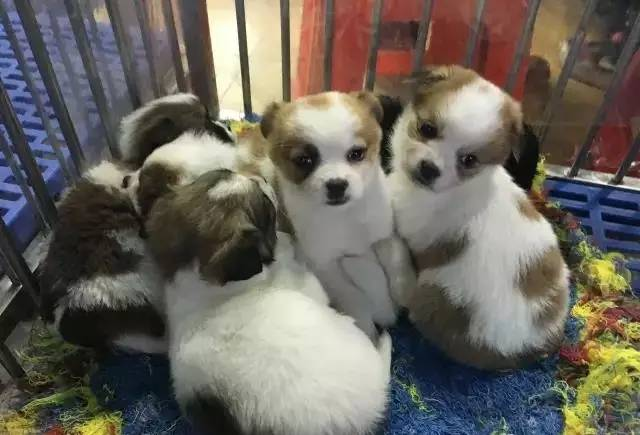 Puppies on sale in Yuehe pets market